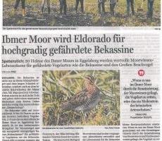 Ibmer Moor wird Eldorado für hochgradig gefährdete Bekassine